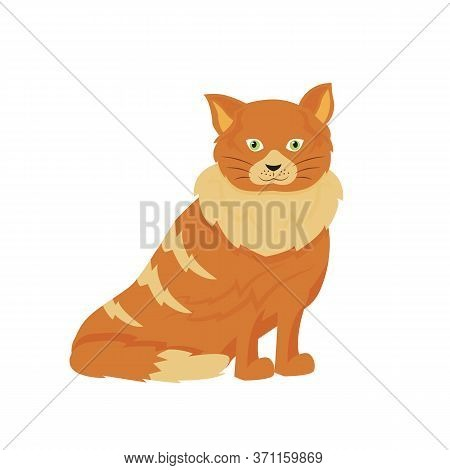 Tabby Cat Flat Color Vector Character. Domestic Animal In Shelter. Pet Sitting And Daycare. Grooming