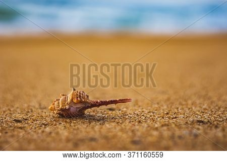 Seashell In The Sand On The Background Of Beach And Sea - (shallow Dof). Beach With Conch Seashell U
