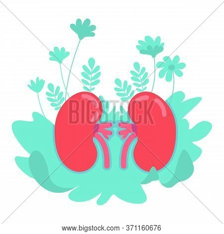 Anatomical Kidney Flat Concept Vector Illustration. Aorta And Cortex Diagnosis. Blood Circulation. P
