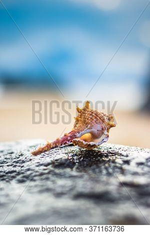 Seashell In The Beach Rock On The Background Of Beach And Sea - (shallow Dof). Beach With Conch Seas