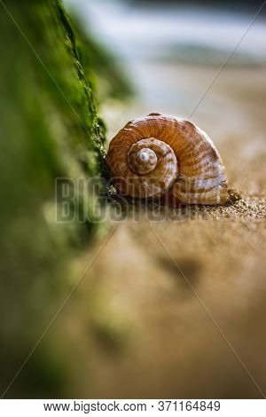Big Seashell On The Sand On The Beach With Water Sea Grasses In The Back-light Of Sunset, Background