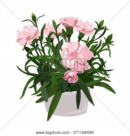 Vector Stock Illustration Of A Clove Sprig In A Pot. Pink Flower Bud For A Bouquet, Watercolor Green