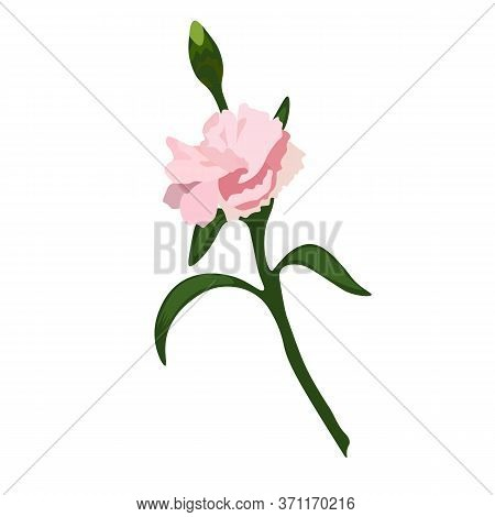 Stock Vector Illustration Of A Sprig Of Clove. Delicate Pink Flower Bud For Bouquet, Postcards, Wate