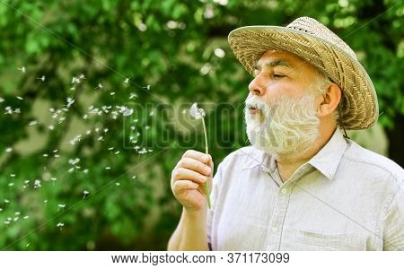 Peacefulness. Tranquility And Serenity. Happy And Carefree Retirement. Lonely Grandpa Blowing Dandel