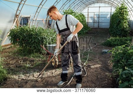 Happy Farmer At Work In Greenhouse