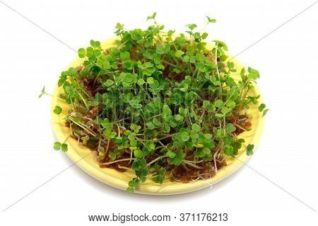 Sprouting Seeds Of Garden Cress In Bowl Isolated On White Background