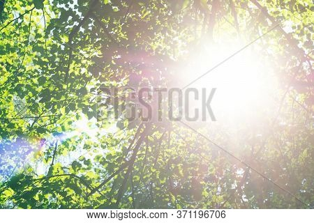 Bright Sunlight Through Trees With Green Leaves. Look Up View On Tops Of Trees And Sunbeam Through I