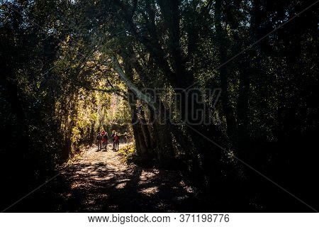 Backlight Along The Path In Castagneto Carducci, In The Heart Of The Maremma Of Livorno, In The Cent