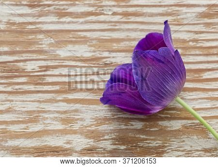 Solitary Purple Flower On Wooden Brown Background