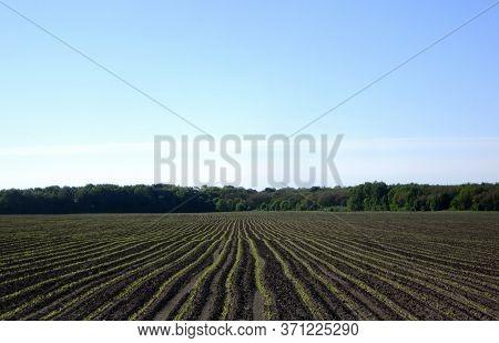 Plowed Field For Potato In Brown Soil On Open Countryside Nature. Potato In Plowed Field, Soil To Gr