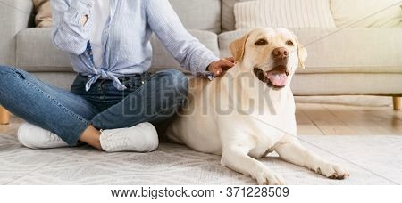 Love And Friendship Concept. Cute Domestic Dog Enjoying Owners Hand Scratching Her Chin, Puppy Lying