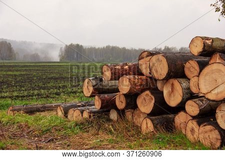 On A Plowed Field, Close-up Stacked Trunks Of Cut Trees.autumn And Spring Fog In The Background, Slu