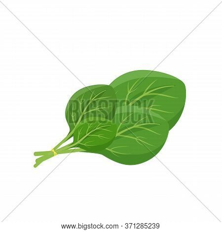 Spinach Leaves Cartoon Vector Illustration. Leafy Green Vegetable Flat Color Object. Source Of Nutri