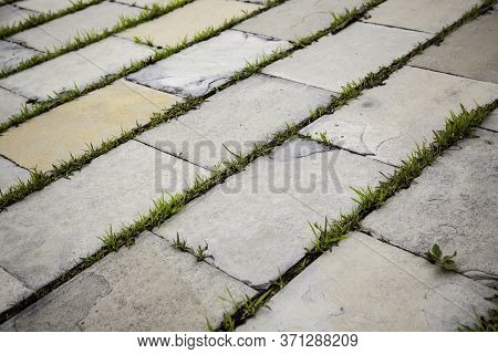 Cobblestones With Herbs, Detail Of Pedestrian Walkway With Vegetation
