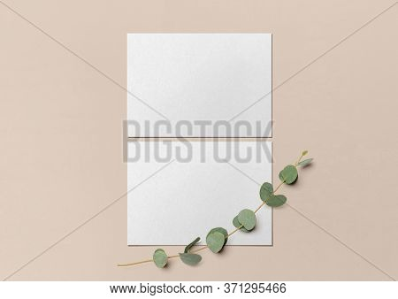 Two White Postcards And A Branch Of Eucalyptus On A Nude Background. Template For Branding Identity.