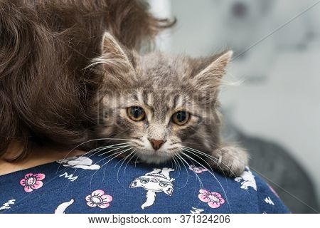 Small, Scared Kitten On The Shoulder