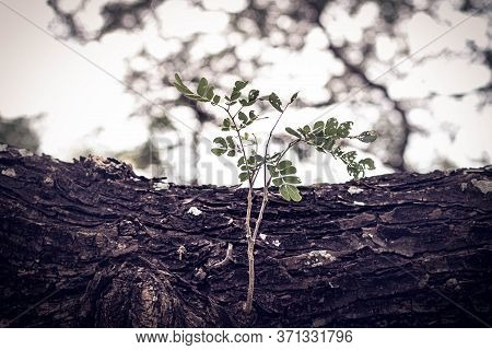 Selective Focus New Born Germinating Bright Green Leaves. Fresh Green Young Plant Of New Seed Born A