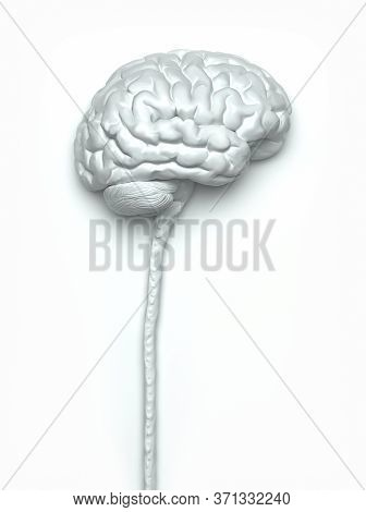Central Nervous System. Brain And Spinal Cord With Clipping Path Included. Conceptual Brain 3d Illus