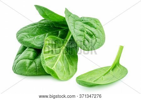 Spinach Leaves Isolated  On White Background. Fresh Spinach Close Up