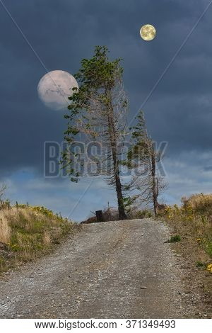 Image Of The Windswept Pines With Moon Fantasy Lndscape