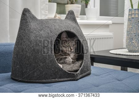Cat Is Lying In The Small House, Cat Condo