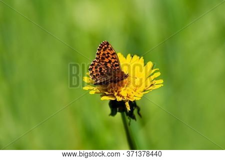 Macrocosm Of Insects And Flowers For Background