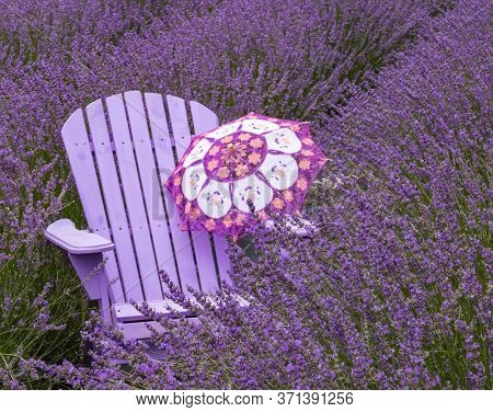 Multi-colored Parasol On Light Purple Adirondack Chair In Lavender Fields Of French Lavender