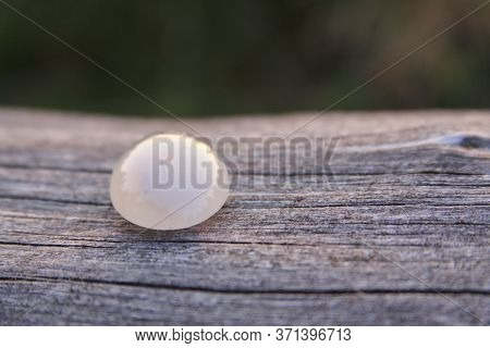 One Isolated Cream White Chalcedony Agate Gemstone On Wooden Background Shining In The Sunlight. Cha