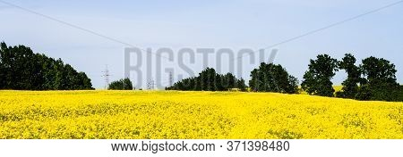Beautiful Field Of Bright Yellow Rape With Trees In Background. Rapeseed Flowers Against Blue Sky. G