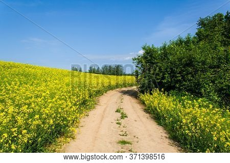 Beautiful Image Of A Centered Country Road With Trees Around The Perimeter. Fields Of Blooming Yello