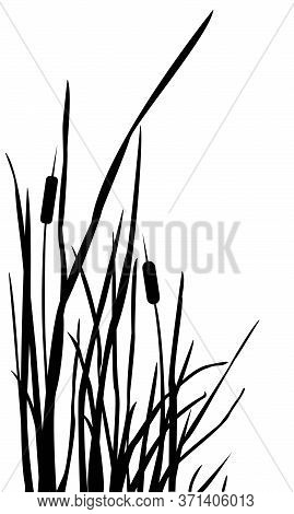 Pattern With Cute Reed.  Scandinavian Hand Drawn Style. Vector Illustration