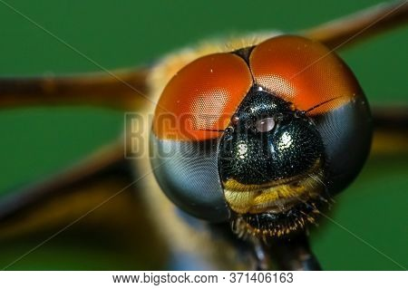 A Macro Shot Of A Dragonfly With Selective Focusing On Its Head. Visible Compound Eyes Of The Insect