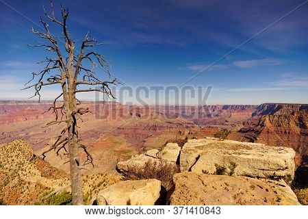 A Barren Tree Stands Silently On The Rim Of The Grand Canyon.