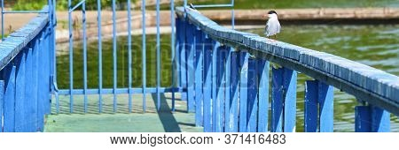 White Bird Sits On The Wharf Color