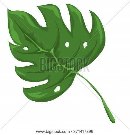 Jungle Leave Image. Forest Nature Plant Vector. Isolated Element For Design Concept. Beautifull Jung