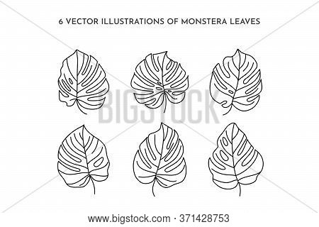 Set Of Monstera Leaf Of Tropical Plants. Outline Palm Leaf In A Trendy Minimalist Liner Style. Vecto