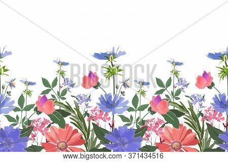 Vector Floral Seamless Border. Summer Flowers, Green Leaves. Chicory, Mallow, Gaillardia, Marigold,