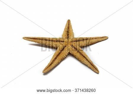 Closeup Of A Fake Seastar On A White Background
