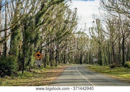 Nsw, Asustralia - 2020-06-08 Burned Bush Along The Road Recovering After Severe Bushfire Damage 6 Mo