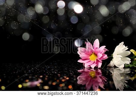 Beautiful Multi-colored Flowers On A Shiny Background