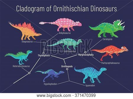 Cladogram Of Ornithischian Dinosaurs. Vector Illustration Of Diagram Showing Relations Among Ornithi