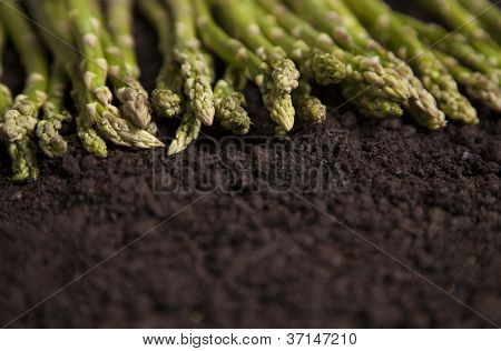 Organic Asparagus In A Row