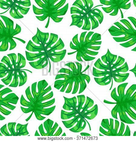 Tropic Monstear Palm Leaves Pattern. Seamless Exotic Pattern With Tropical Monstera Leaves . Vector