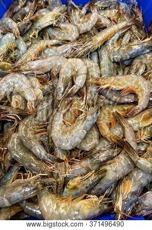 Pile Of Fresh White Shrimp On Blue Background Sale In The Market.