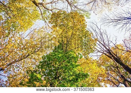 Multi-colored Crowns Of Trees In The Fall Against The Blue Sky. Bottom Up View
