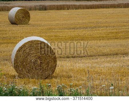 bales of straw on a field in agriculture