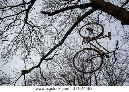 bicycle hangs on a tree