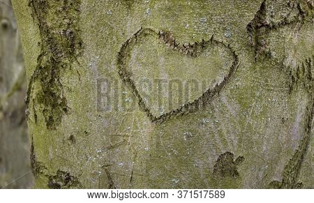 heart was carved into the bark of a tree