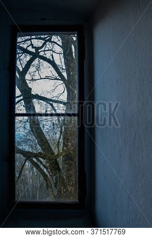 view from a window of a bare tree