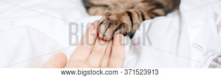 Man Giving Open Hand To Cat. Woman Touching Cats Paw As Sign Of Support, Compassion And Care. Relati